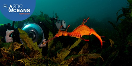 Dive with marine scientists without getting wet! – Virtual experience tickets