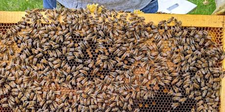 Introduction à l'apiculture et les abeilles indigènes billets