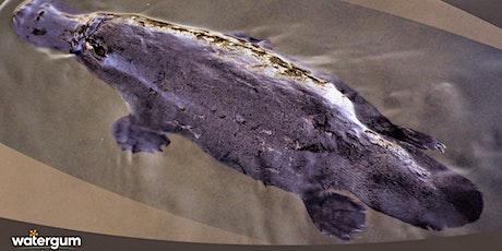 PlatypusWatch Survey - Currumbin tickets