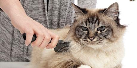 Webinar: Initiatie huid en vacht kat tickets