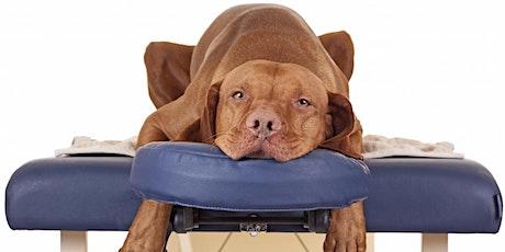 Webinar: Massage, body en belance: Maak van jouw hond een fitte senior tickets