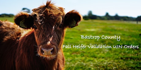 Bastrop County Fall Heifer Validation tickets