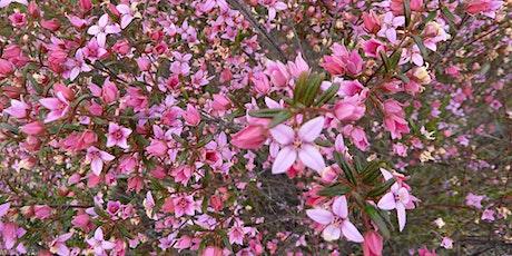 Wild Wednesday - ' Spring into Nature'  Wildflower walk - The Basin tickets