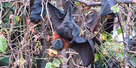 Bush Explorers 'Spring into Nature' -  Spring bat night! Milton Park tickets