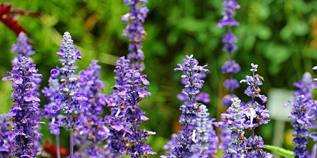 The Healing Spirits of Plants with Bee Helygen tickets
