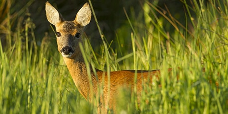 Tracking Mammals tickets
