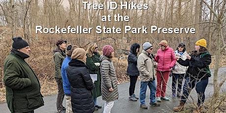 August13|12:00 pm – 1:00 pm| Tree ID Walk with Kim Castaldo tickets