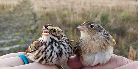 Significance of Sparrows