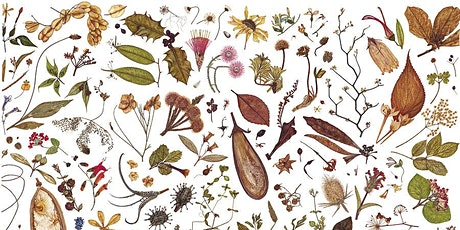 Herbal Specimen Drawing Workshop tickets