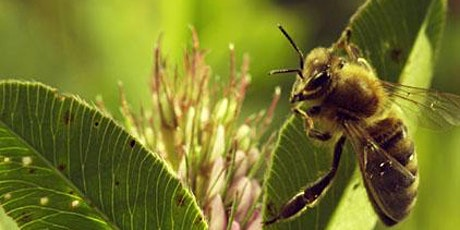 "Monthly Climate Cafe: ""More than Honey"" online film-showing and discussion tickets"