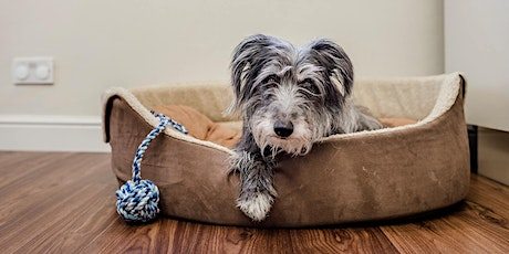 When Pets Pass On: Sharing Good Practice in Pet Bereavement tickets