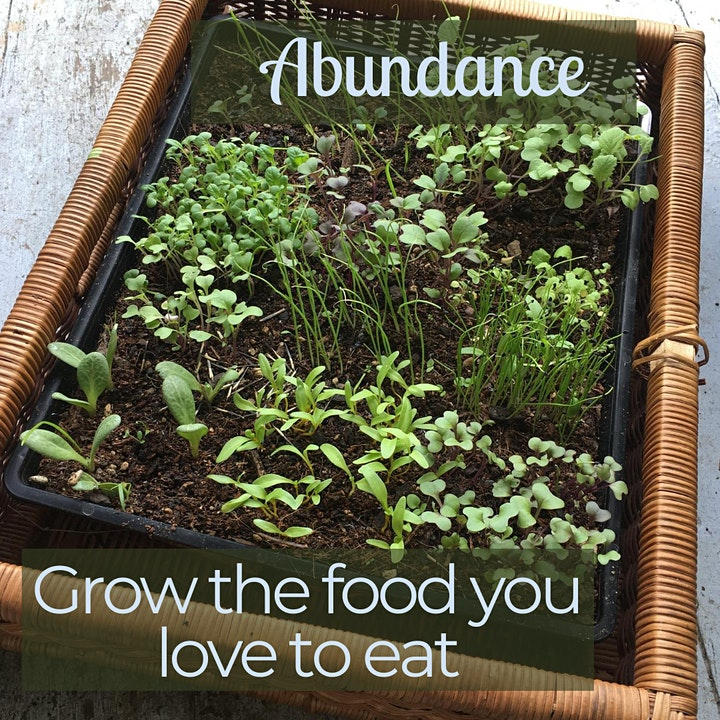 Ready, Set, Spring: Edible Gardening basics for July/August in Auckland image