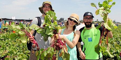 התנדבות קטיף במשק - Harvest Picking Volunteering tickets