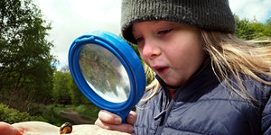 Wild Play 6 August - Exploring Woodland Creatures at...