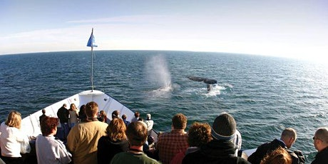 Weekend Whale & Dolphin Watching Adventures in San Diego tickets