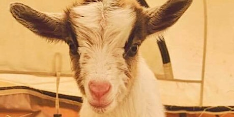 Goat Yoga with baby goats tickets