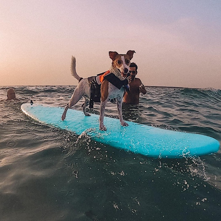 Surf N Paws lessons image