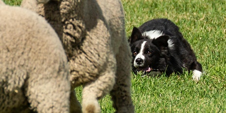 2020 Meeker Classic Sheepdog Championship Trials have been CANCELLED tickets