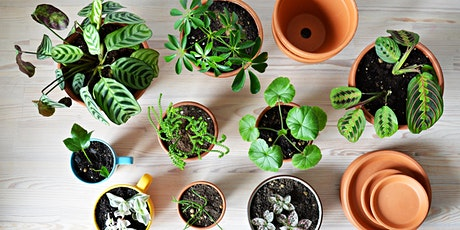 Learn to propagate plants with Claire + relax with a free drink tickets