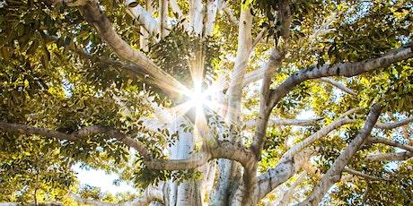 Jeudis Philo : Nature & Philosophie billets