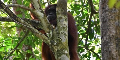 A Journey to the Borneo Rainforest tickets