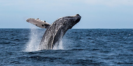 An ADF families event: Whale watching walk and talk, Hunter tickets