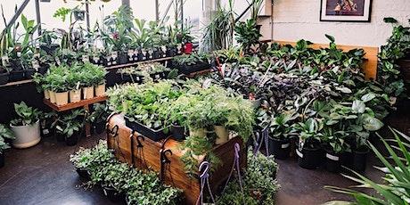 Melbourne Virtual Pop-up Shop - Huge Indoor Plant Sale tickets