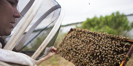 Fall 2020 Beginner Beekeeper's Short Course tickets