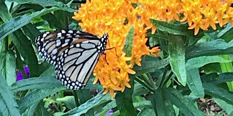 Monarchs, Milkweed, and Citizen Science tickets