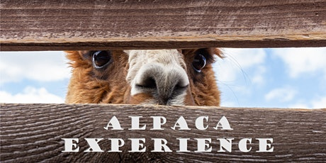 Alpaca Meet&Feed tickets