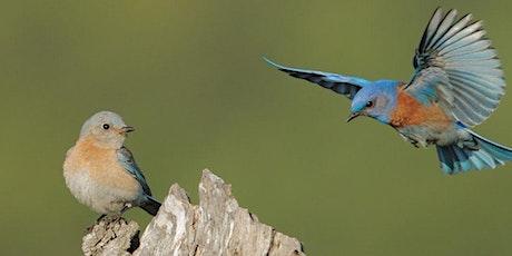 Birds of Calero County Park and Oak Woodlands tickets