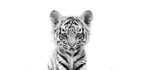 60min  Animal Sketching - Baby Tiger @12PM (Ages 6+) tickets
