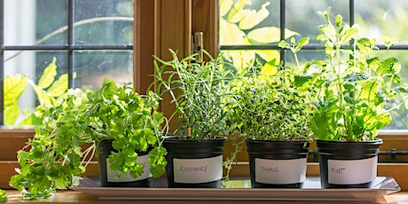 Growing Herbs Indoors tickets