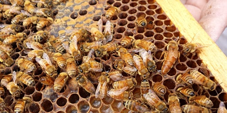 Virtual Ask a Beekeeper tickets