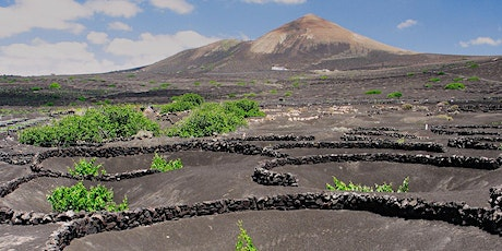 What's Special in Volcanic Wines? a Tasting of Exceptional Wines tickets