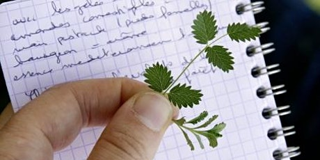 Comment dessiner la nature ? billets