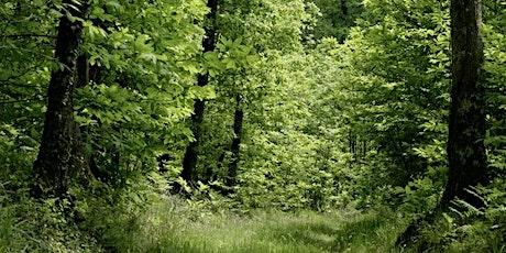 Les forêts billets