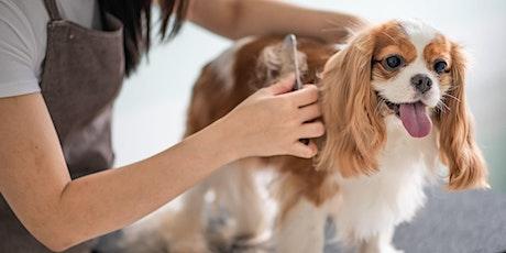 Initiatie huid en vacht: Hond tickets