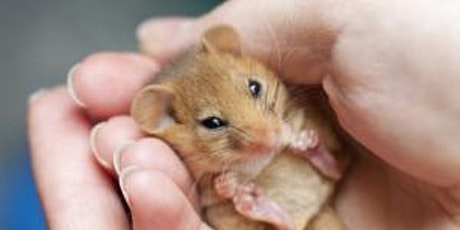 Dormice - additional course added due to demand tickets