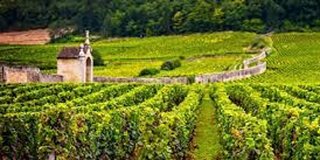 Burgundy 101 Virtual Wine Tasting  with Emma Stetson of Vinilandia Co. tickets