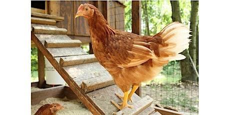Backyard Chicken Training Class - Zoom webinar tickets
