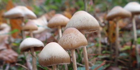 Psychedelic Medicine: past, present and future tickets