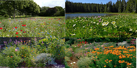 Micro-Prairies / Meadow Gardening tickets