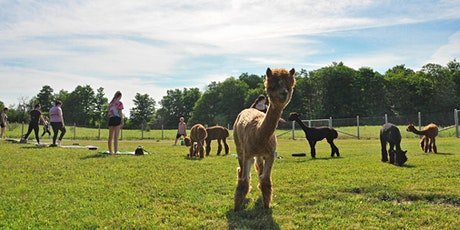 Yoga with Alpacas tickets
