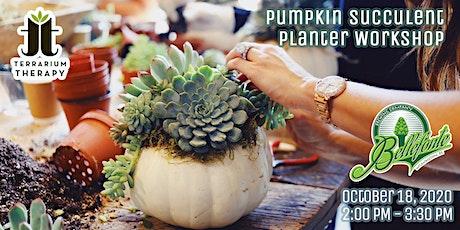 In-Person Workshop - Pumpkin Succulent Planter @ Bellefonte Brewing Company tickets