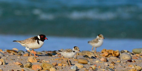 Helping Hooded Plovers tickets