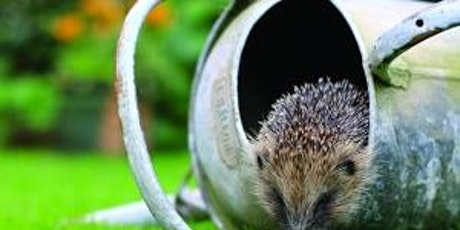 Hedgehogs - second course added due to demand tickets