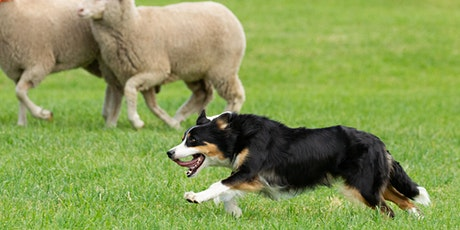 2021 Meeker Classic Sheepdog Championship Trials tickets