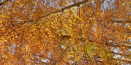 The Secret Life of Trees: New Findings from Science - Virtual Workshop tickets