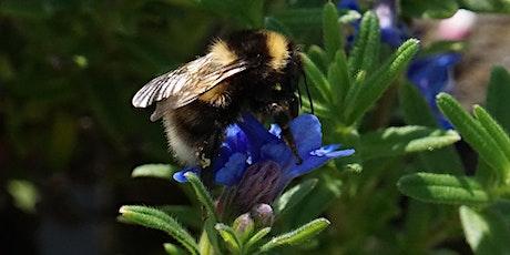 Planters for Pollinators tickets